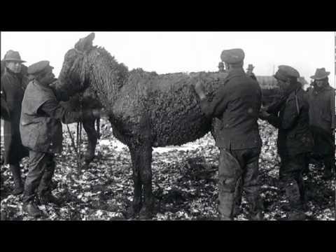 War Horses Of WW1 - Trailer
