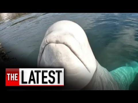 Clint Girlie - Huge Whale Returns Kayaker's Camera After It Falls In Water
