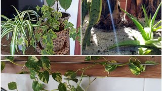 7 Plantas que Purificam o Ar