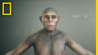 Human Origins: Early Humans thumbnail
