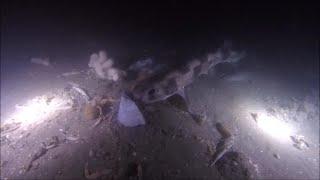 QUB Conservation: Underwater Cameras