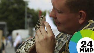 В Индии устроили традиционный фестиваль змей