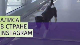Талисман аэропорта Симферополя – собака Алиса завела Instagram