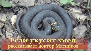 Если укусит змея. Рассказывает доктор Мясников.