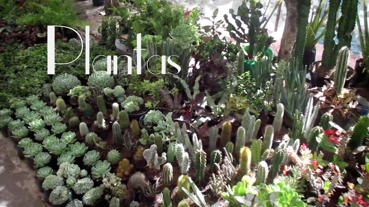 Mis plantas de sol y sombra feria de la candelaria 2016 - Plantas de sol y sombra ...