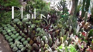Mis plantas de sol y sombra - Feria de la Candelaria 2016