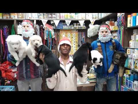 Baixar Raj pet shop - Download Raj pet shop   DL Músicas