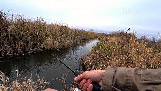 ДА сколько здесь РЫБЫ в этом РУЧЬЕ?!! Рыбалка на спиннинг.