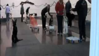 Dog Training - Las Vegas Class