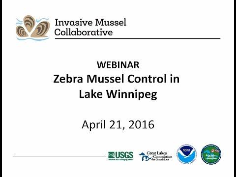 IMC: Zebra Mussel Control in Lake Winnipeg