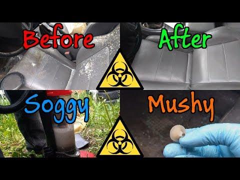 Mitsubishi Eclipse GSX - DSM Biohazard Interior Cleaning - Glass, Mold, Mushroom!