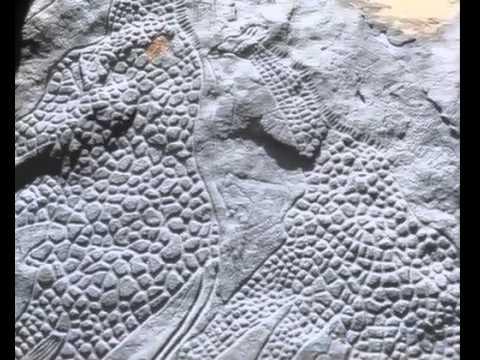 the worlds largest rock art petroglyph dabous giraffe - 480×360