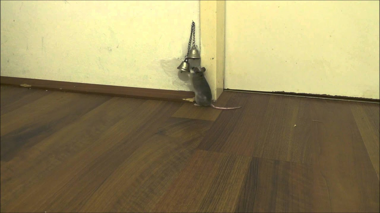 & How my mice ask me to open the door - YouTube pezcame.com