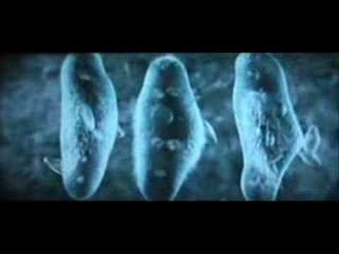 "Gad Elmaleh dans ""Les 11 commandements"" from YouTube · Duration:  33 seconds"