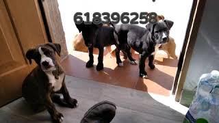tienen 2 meses y medio 618396258 adopta en Murcia