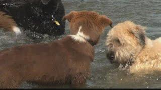 Toxic blue-green algae blamed for dog deaths