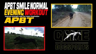 APBT Smile American Pitbull normal evening Workout Impossible Power