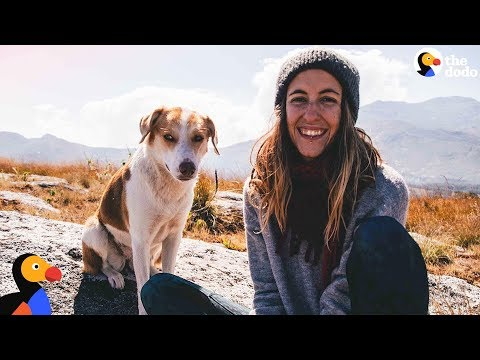 Traveling Woman Rescues Dog That Changes Her Life Forever | The Dodo