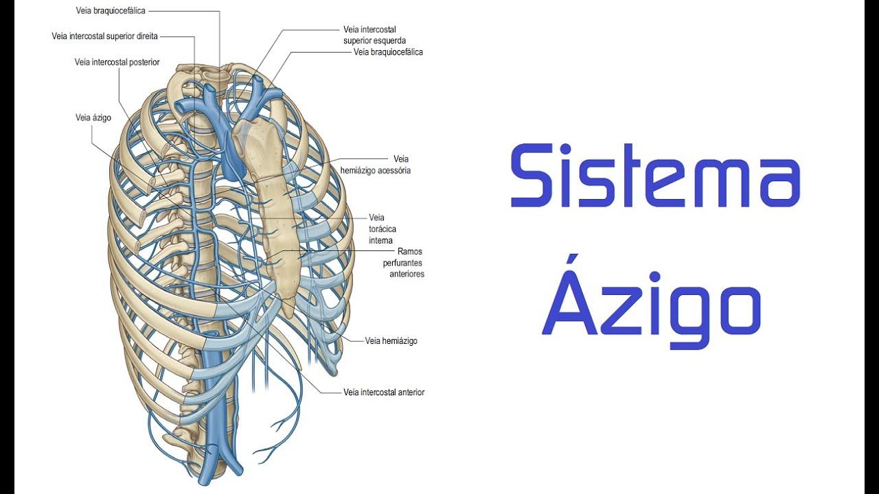Sistema Ázigo - YouTube