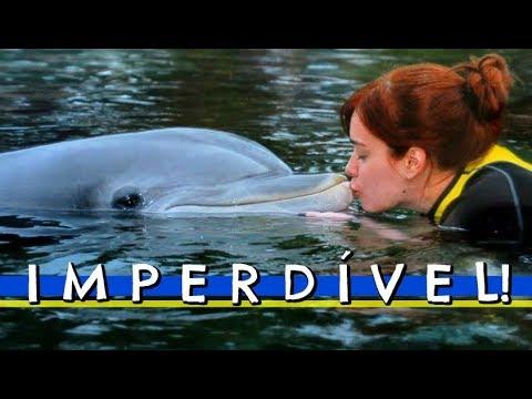 DISCOVERY COVE: Nadando com GOLFINHOS em ORLANDO!