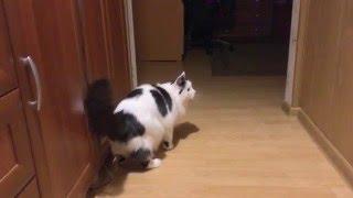 Коту 16 лет , а ума нет