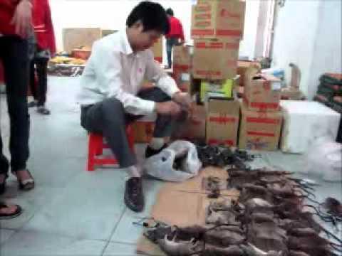 Diệt 10kg chuột tại siêu thị