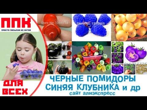 помидоры арбузики фото