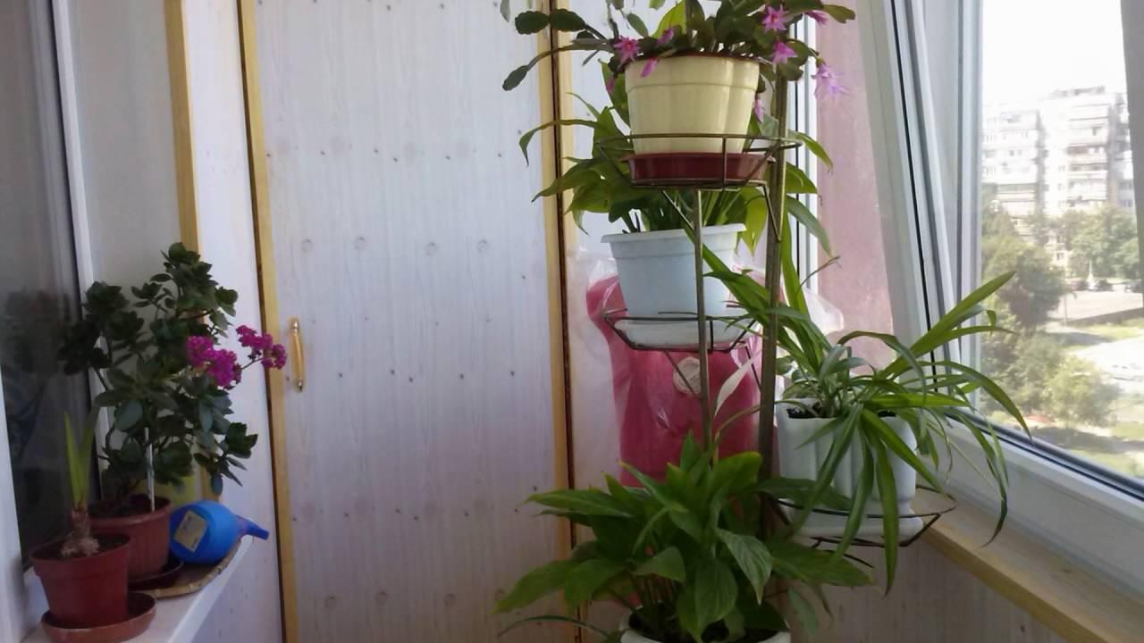 Азбука цветов. Цветочная азбука 46