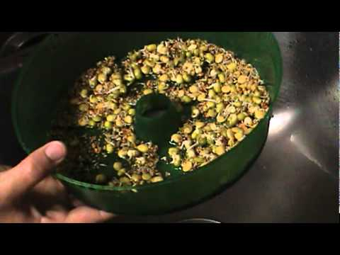 How To Grow Sprouts With The Handy Pantry Sprout Garden YouTube
