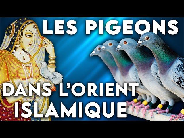 Les pigeons voyageurs dans le monde islamique : messagers… et athlètes !  - Focus #11