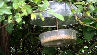 X1 Robin Bird Feeder For Soft Foods And Live Foods