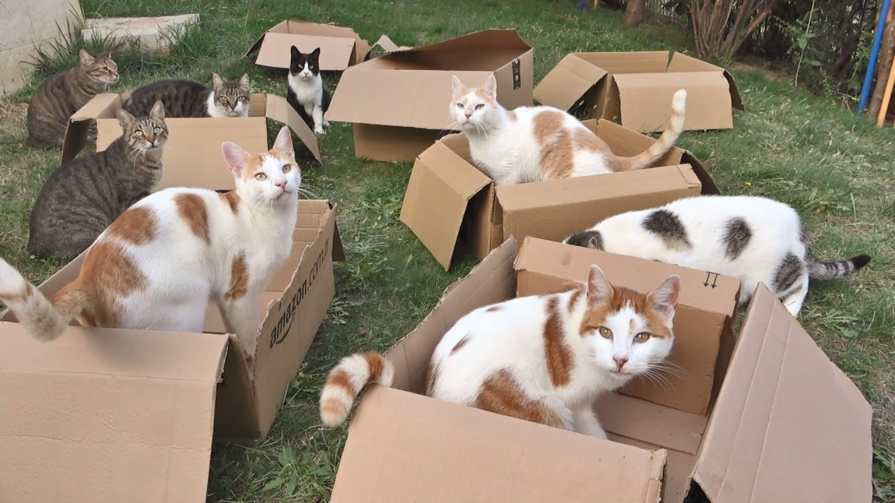 Download 12 Cats and 8 Boxes !! Is This Cat Heaven??