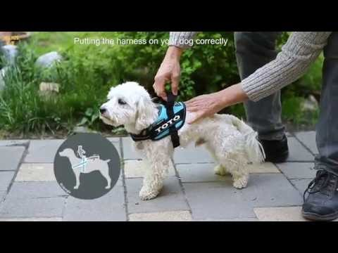 IDC® and K9® Harnesses proper sizing of...