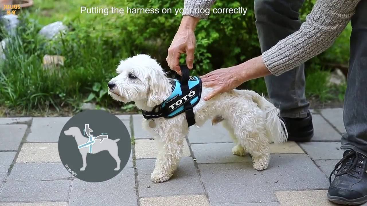 Idc And K9 Harnesses Proper Sizing Of Harness Youtube