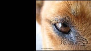 أغنية كلب بلدى ( من أكثر الاغانى معبرة فى العاالم ) ☺