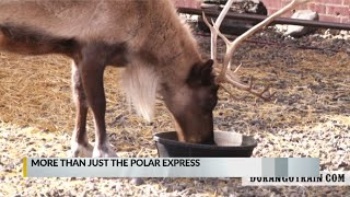 Santa loans reindeer duo to Durango & Silverton Narrow Gauge Railroad