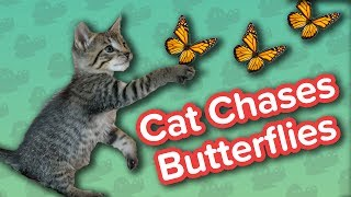Cat Chasing Butterflies & Muddy Dogs! // Funny Animal Compilation