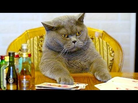 Humorous videos of cats, dogs and other animals - Funny and cute compilation - Watch and laugh!