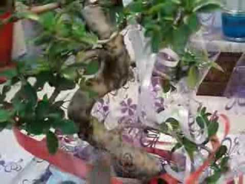 Envio de bonsai