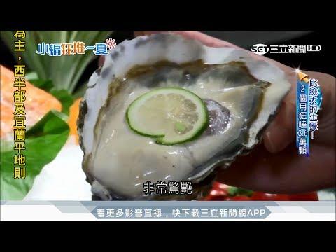 鮮!生蠔、龍蝦吃到飽!肥美帝王蟹涮涮鍋【小編狂推一夏(一)】三立新聞高毓璘
