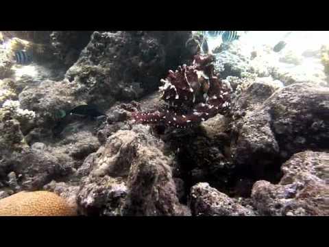 Octopus Garden Youtube