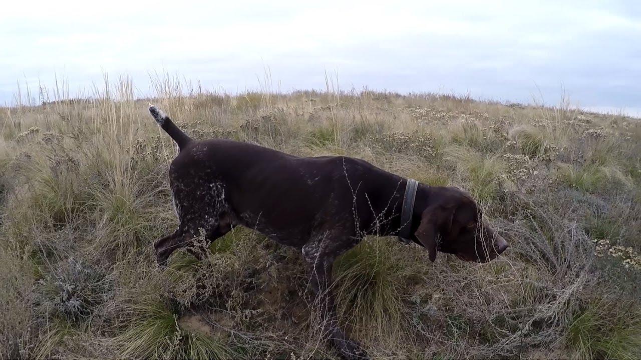 охота с собаками осенью
