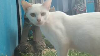 sex video cat may pilahan ang weird !!! 🤔🤔🤔
