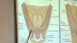 Dr Ahmed El Zeiny Pelvis 5 (Perineum) part2