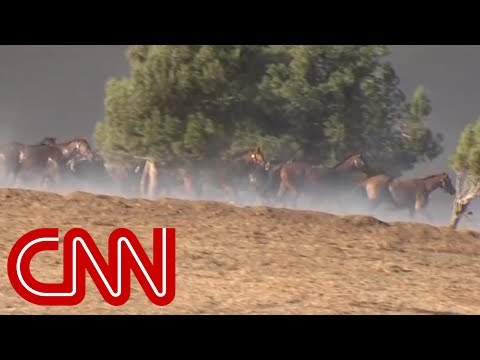 Horses Killed In California Wildfires