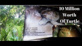 10 Million Worth of Albino Turtle