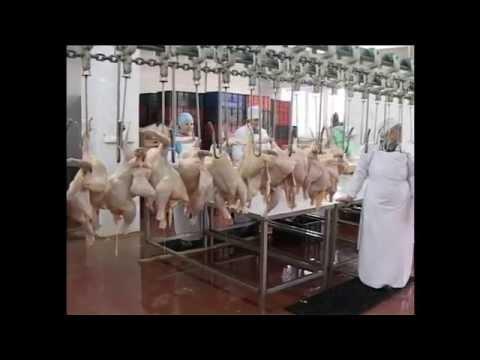 Мясные субпродукты классификация ассортимент требования к качеству