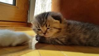 Самый милый котенок - the cutest kitten ever
