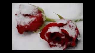 Darko Domijan - Ruze U Snijegu (MyVinyl)