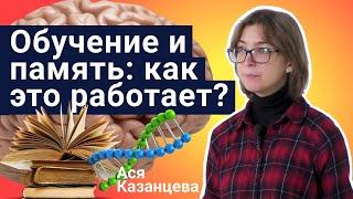 Стань учёным!   Обучение и память: как это работает? - Ася Казанцева